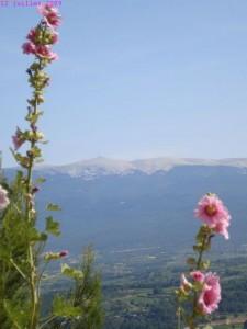 Le Mont Ventoux en arrière plan (une idée de Laétitia)